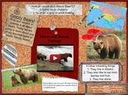 Grizzly bears's thumbnail