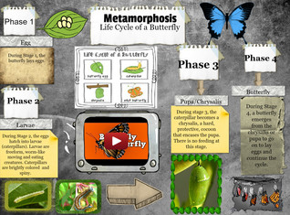Metamorphosis: The Life Cycle Of A Butterfly