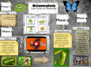 Metamorphosis: The Life Cycle Of A Butterfly' thumbnail