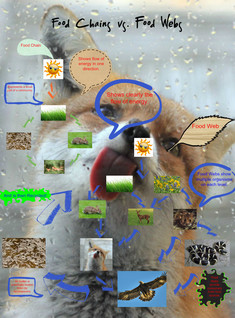 Food Chain vs. Food Web