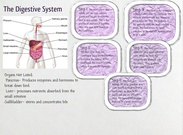 The Digestive System -Lexi Overton's thumbnail