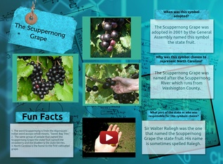 The Scuppernong Grape