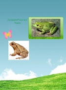 Frogs and Toads's thumbnail