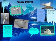 Antarctica is th coolest place on earth!'s thumbnail