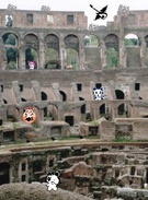 rocking the colosseum's thumbnail