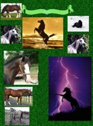 Horse of Riding Steeds's thumbnail