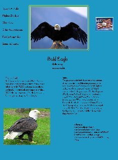 Sample Glog - bald eagle