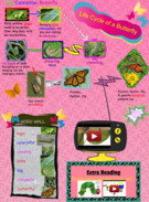 life cycle of monarch butterfly glog's thumbnail