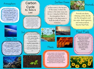 lexi's carbon cycle project