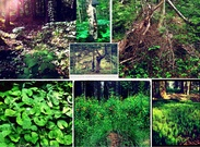 Acadian Forest Restoration's thumbnail
