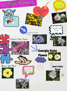 10 state flowers's thumbnail
