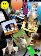 CATS... U NO U LOVE THEM's thumbnail