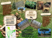 Dry forest's thumbnail