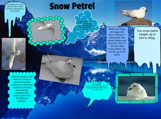 Antarctica is th coolest place on earth!