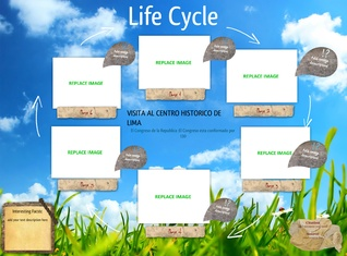 Life Cycle of the Bug
