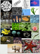 6 kingdoms of life collage' thumbnail
