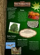 Temperate Deciduous Forest thumbnail