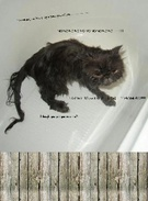 funny cat in bath's thumbnail