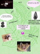 All About Bats's thumbnail