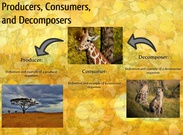 Producers, Consumers, and Decomposers's thumbnail