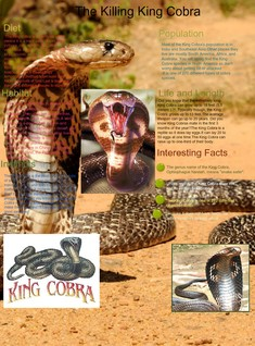 The Killing Cobra