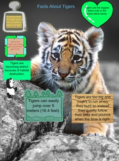 'Tiger Facts' thumbnail