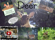 About deer:) thumbnail