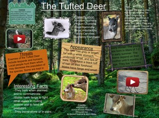 [2015] Jalynn Beckett: The Tufted Deer