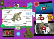 The life cycle of a frog' thumbnail