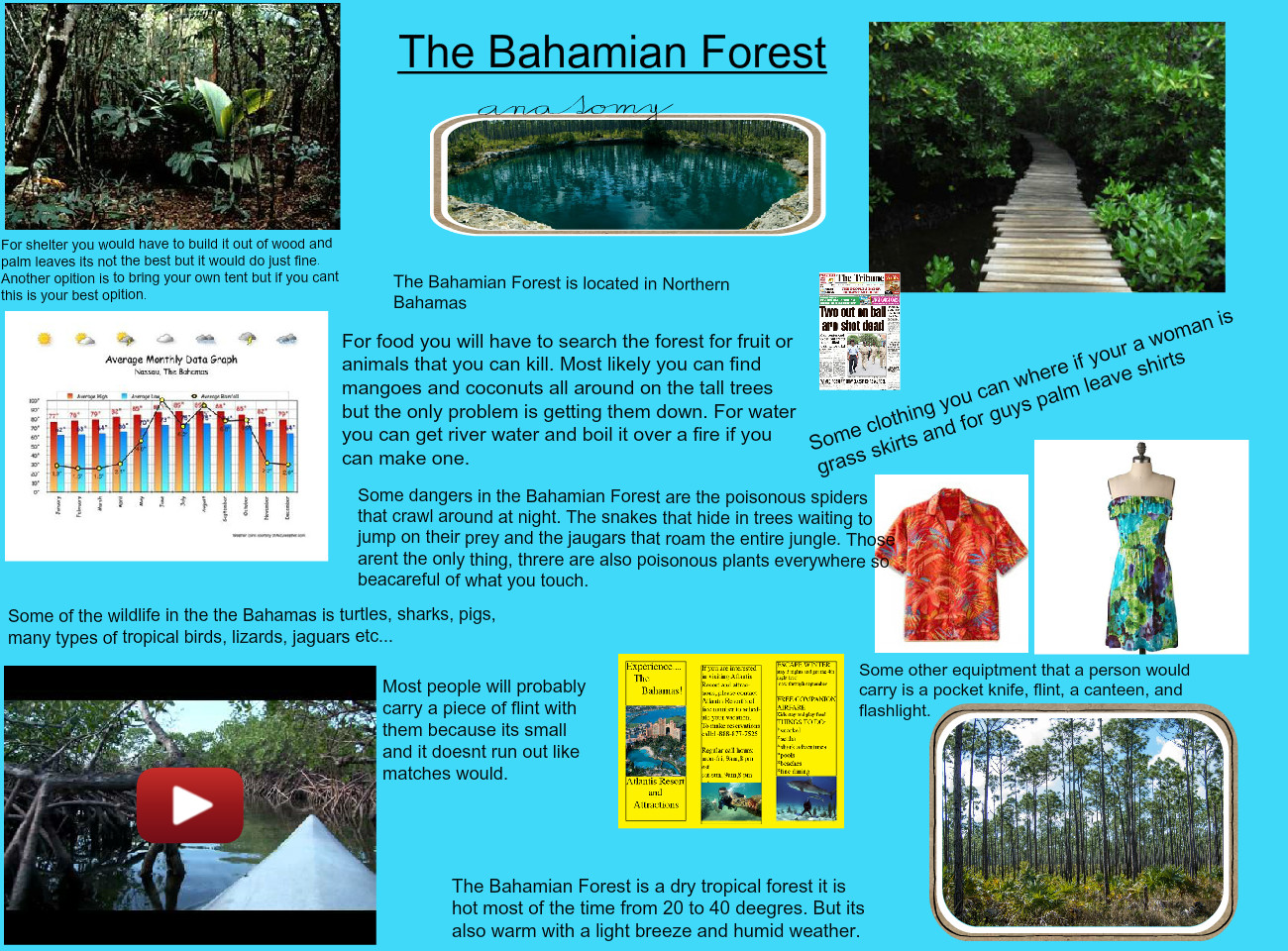 The Bahamian forest
