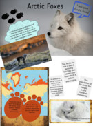 Arctic Foxes by Hannah and KC's thumbnail