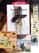 German Shepards's thumbnail